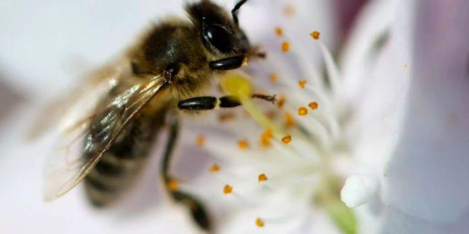 Rettet Die Bienen: Bayerisches Volksbegehren «Rettet Die Bienen» Könnte
