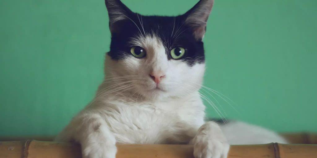 Was Bei Katzen Gegen Durchfall Hilft