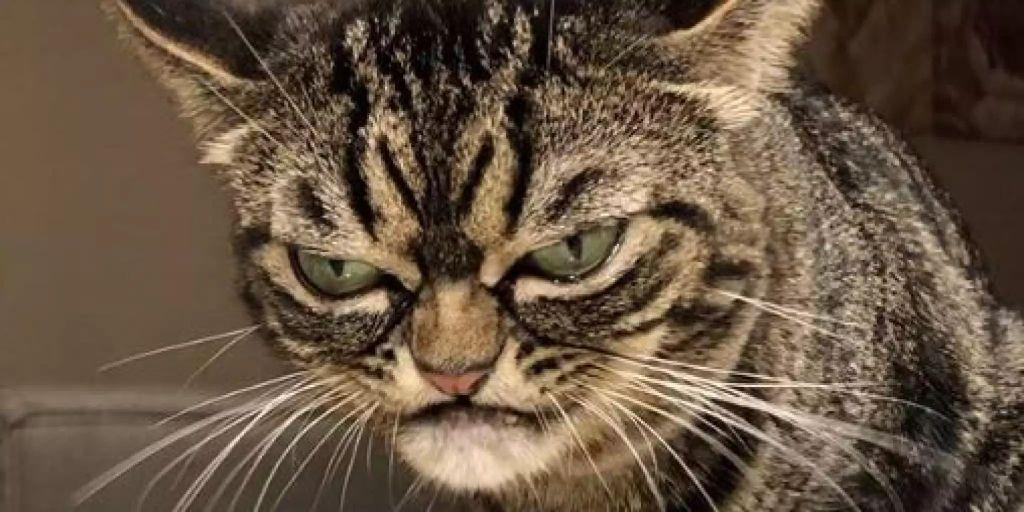 Angry Kitzia ist die neue Grumpy Cat