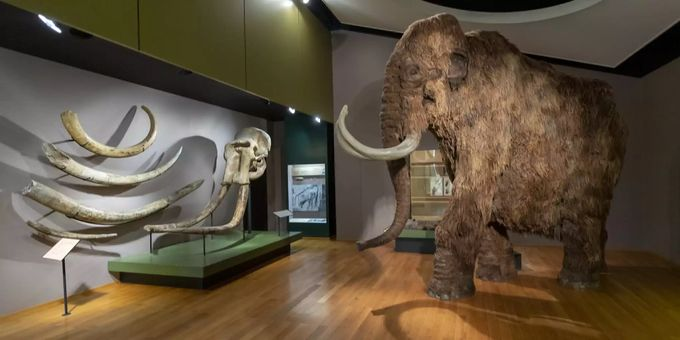 united states wholesale dealer get online Mammut im Museum