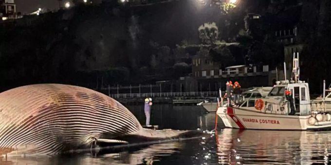 Riesenwal