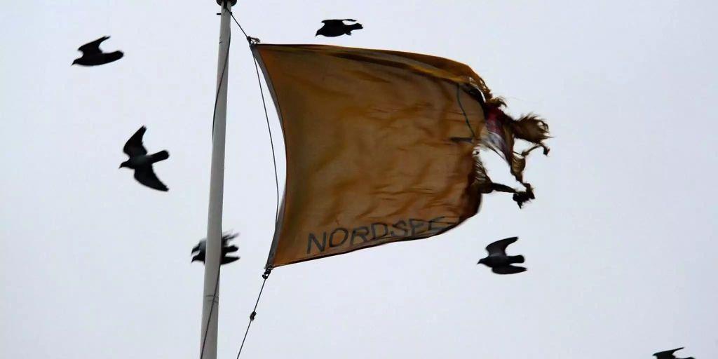 Vogelsterben Nordsee