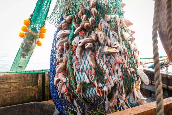A full bottom trawl of a trawler in the English Channel - Keystone
